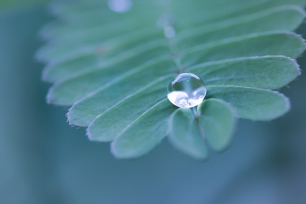 Water drop  by hkavmode