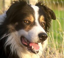 My Boy Laddie. by Michael Haslam