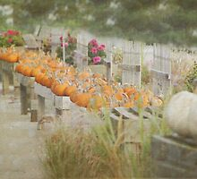 Visions of Fall by debbienobile