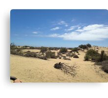 Sand Dunes of Maspalomas Canvas Print