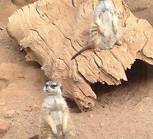 Meerkat Pose by Emma Harris