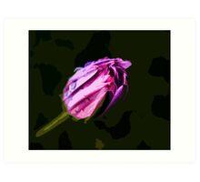 Dewy Daisy Art Print