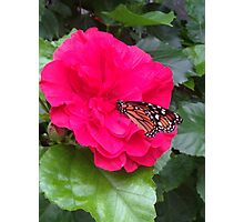 Butterfly Flower Photographic Print