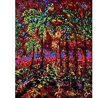 Sunbeam by Florida Artist John E Metcalfe Photographic Print