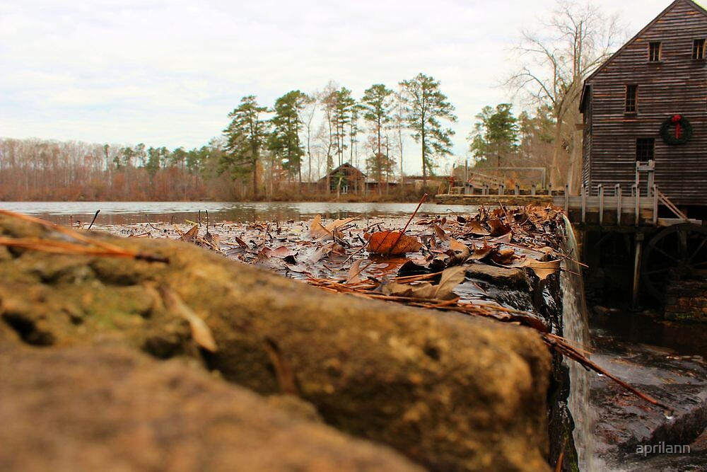 Beautiful December Day in North Carolina by aprilann