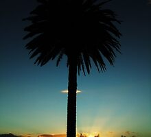 Palm Sunset by jlv-