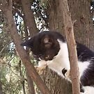 Step One   Climb The Tree   by fiat777