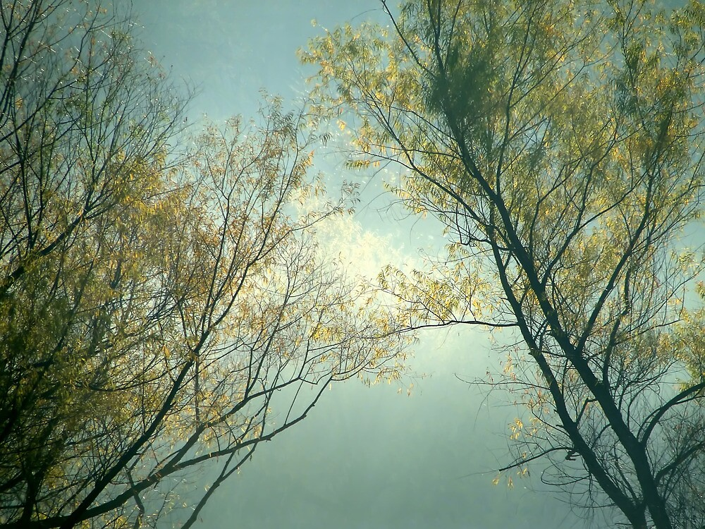 Misty Autumn Backlit Trees by Carolyn  Fletcher