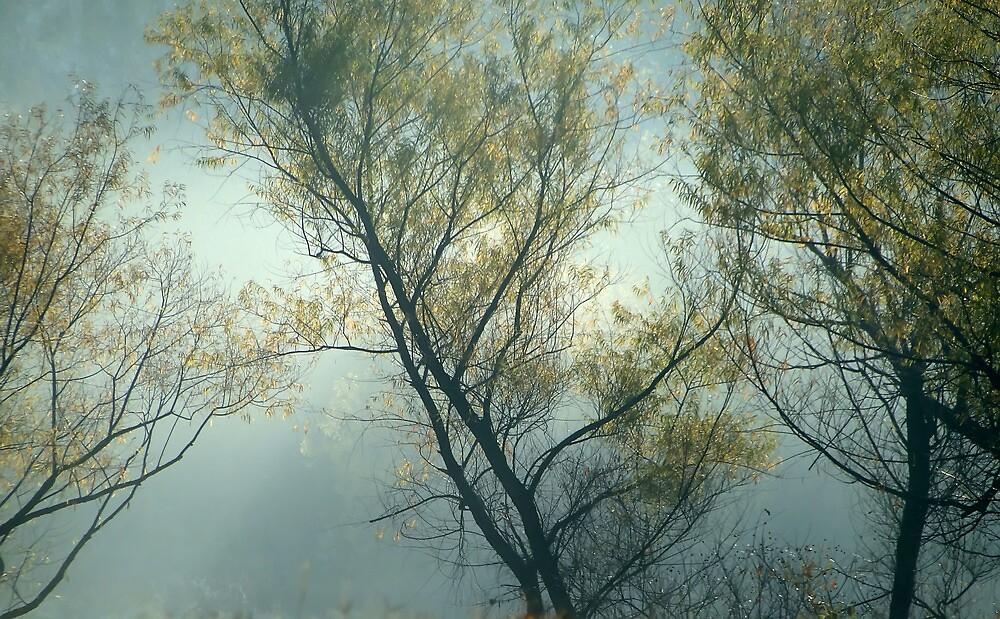 Backlit Autumn Trees On A Misty Morning by Carolyn  Fletcher