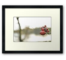 Red Berries at Christmas Framed Print