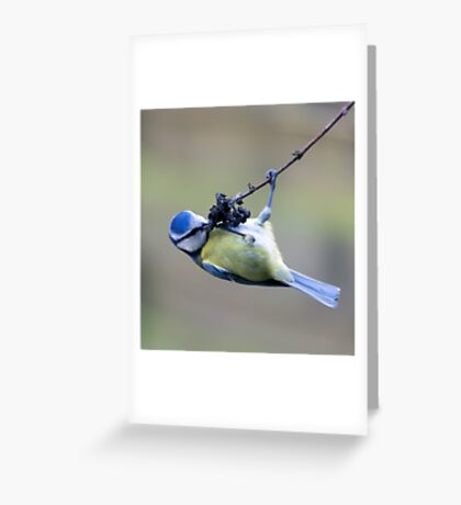 bue tit eating Greeting Card