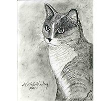 Tabby Cat Portrait Photographic Print