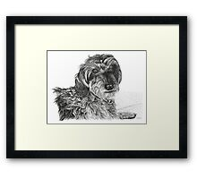 Schnell, Wire Haired Dachschund Framed Print