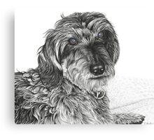 Schnell, Wire Haired Dachschund (cropped edge) Canvas Print