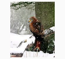 Red Kite in snow T-Shirt