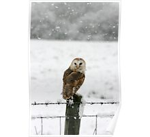 Barn Owl in snow Poster