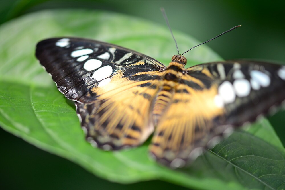 Butterfly Museum III by Ginadg73