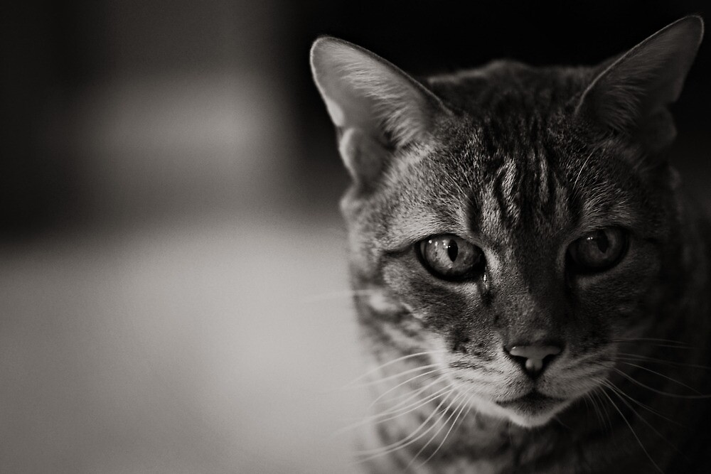 Kitty Kitty B/W by Ginadg73