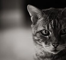 Kitty Kitty B/W by Ginadg73
