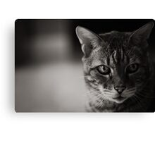 Kitty Kitty B/W Canvas Print