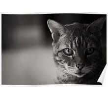 Kitty Kitty B/W Poster