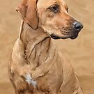 THE RHODESIAN RIDGEBACK - Iphone Case by Rob  Toombs