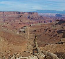 Dry log, abyss, road and mountains, Canyonlands National Park by Claudio Del Luongo