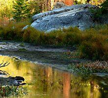Autumn's golden foliage by Elaine Bawden