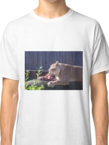 Female lion eating fresh red meat Classic T-Shirt