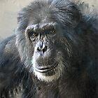 Chimpanzees by Savannah Gibbs