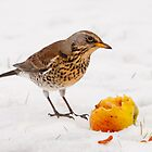 Fieldfare by M.S. Photography & Art