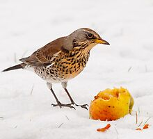 Fieldfare by Margaret S Sweeny