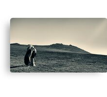 A horse in a field Canvas Print
