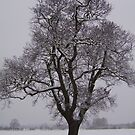Oak in the Snow by Lucy Wilson