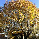 Autumn tree by katkeldeen