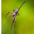 Tiny Spider On A Leaf by RH-prints
