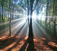 Sunrays by Lindie Allen