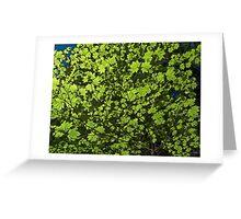 Vine Maple Greeting Card