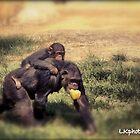 Monkey by LKPhoto