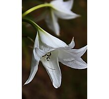 Beauty In White Photographic Print