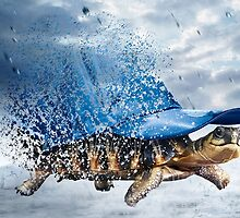 Turtle by axanatjeuh