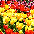 Floriade by Julia Harwood
