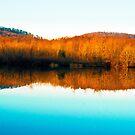 November Light by photosbytony