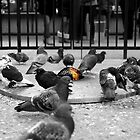 Panic In Pigeon Park by OilPrints