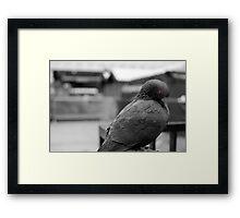 Birdneck Sweater Framed Print