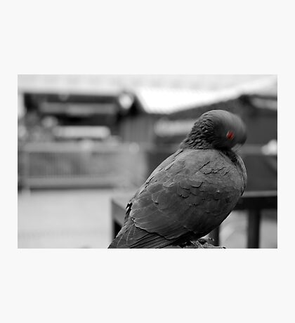 Birdneck Sweater Photographic Print