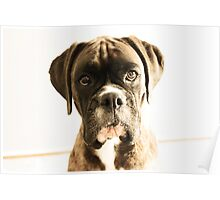 The Meaning Of Life - You AsK? - Boxer Dogs Series Poster