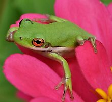 Tree Frog On A Pink Flower by Kathy Baccari