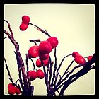 Persimmons by kturner07