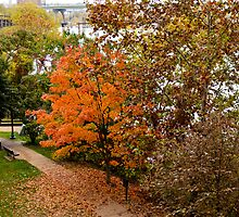 Fall Comes To Richmond by Fred Moskey